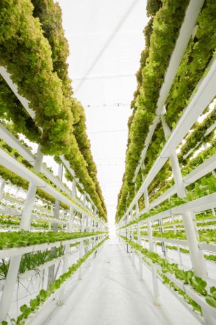agriculture-verticale-indoor-mba
